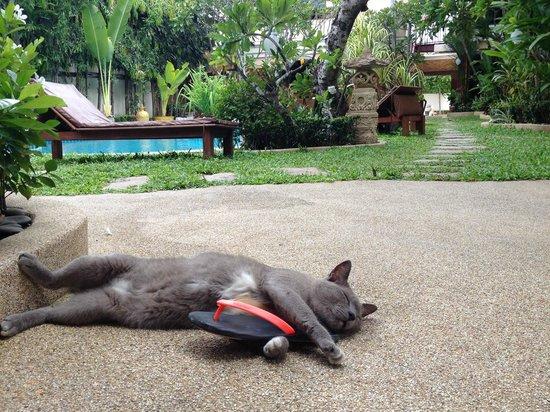 Le Viman Resort: c'est mignon lol