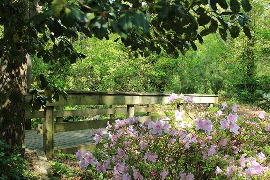 Νιούπορτ Νιουζ, Βιρτζίνια: Noland Trail