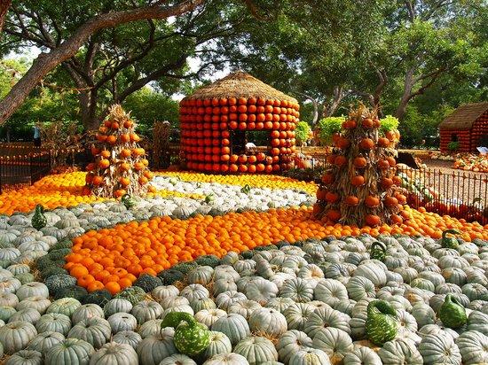 Garden wedding picture of dallas arboretum botanical - Botanic gardens pumpkin festival ...