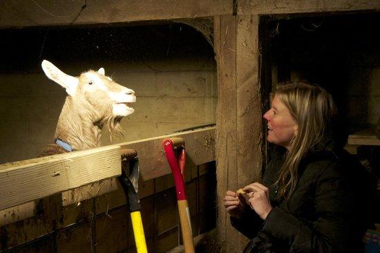 Lucky Dog Farmstay: Meeting the goats. So fun!