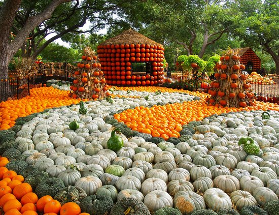 Dallas Arboretum & Botanical Gardens: Pumpkin Village