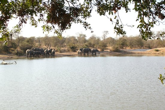 Wild Wings Safaris: the view in front of GOMOGOMO lodge