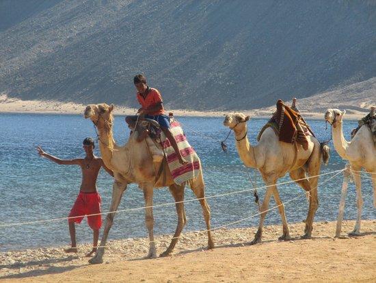 Happy Life Village: ragazzi e cammelli