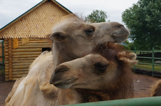 Ryazhsk, Rosja: Сладкая парочка