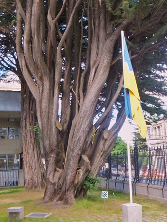 Centro Cultural Braun-Menendez: This Lovely olde tree greets you as you enter the property