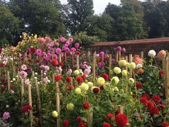 Superbe Baddesley Clinton: Dahlia Garden