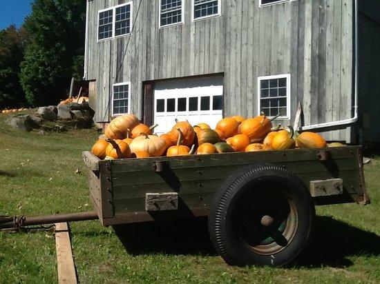 Angevine Farm: ready to go