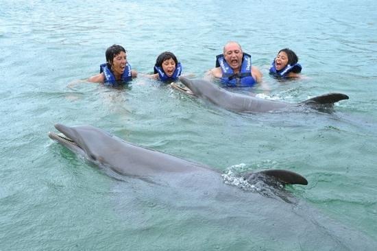 Delphinus Punta Cancun: Experiencia inovidable!