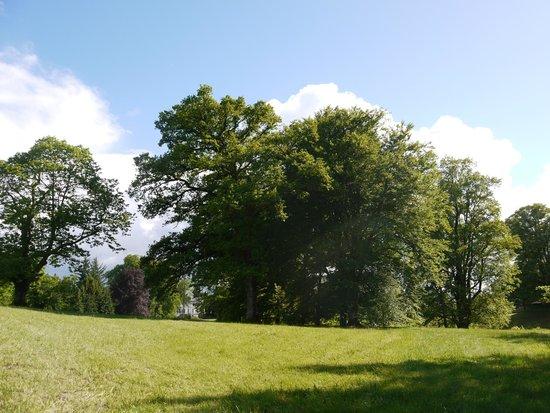 Arboretum du château de Neuvic d'Ussel : Les chênes