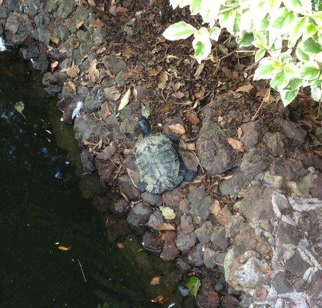 Quinta Jardins do Lago: La tortue d'eau