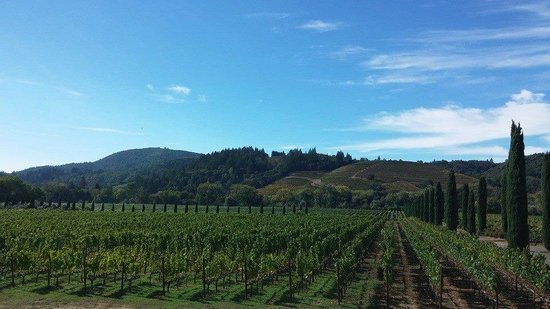 Wine Country Chauffeur: Relaxing View