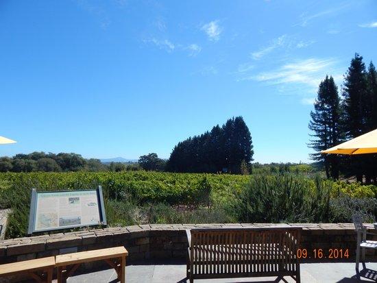 Lynmar Estate Winery: Lynmar garden area