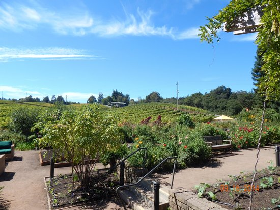 Lynmar Estate Winery: Lynmar patio/garden area