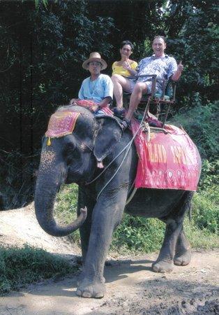 Island Safari: Hungry Elephant but no Bananas Left