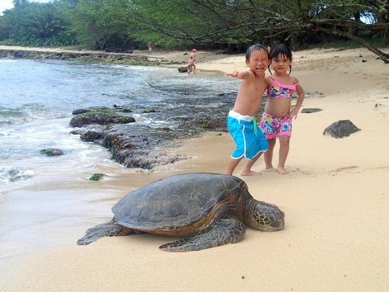 Blue Rush Surf School: Lots of sea turtles in the water and on the beach!