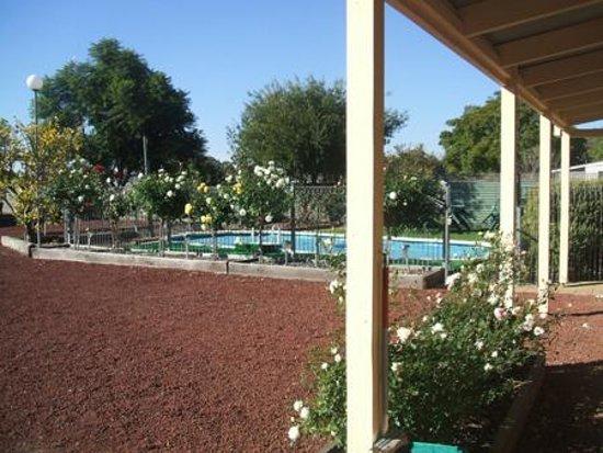 Barham Colonial Motel: Swimming Pool