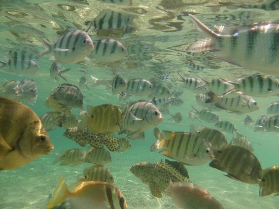 Charm Churee Villa: Fish life on the beach