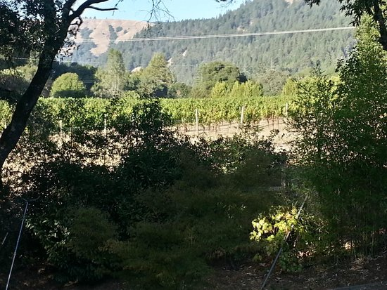 "The Madrones: Vineyard View Off the Deck of ""The Master"""
