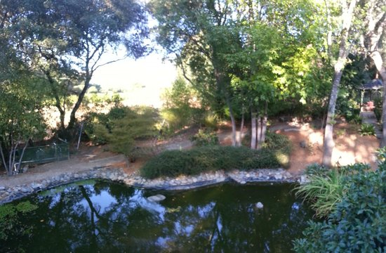 "Philo, CA: Koi Pond at the Deck of ""The Master"""