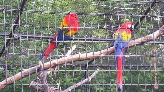 The Dakota Zoo: Color