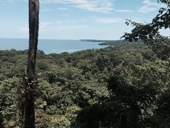 Caribeans Coffee & Chocolate : View from the top of the plantation.