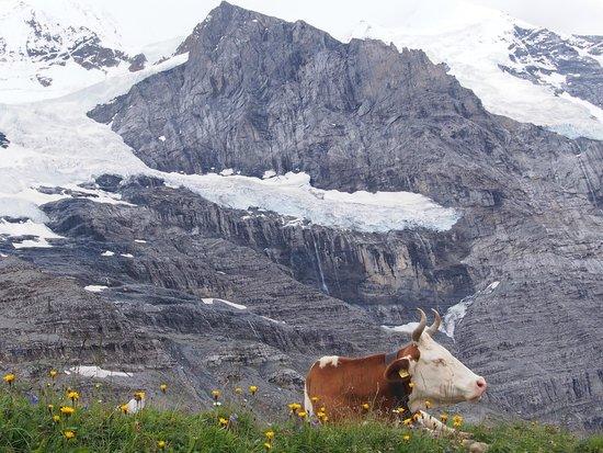 Grindelwald, Switzerland: カウベルの音が心地よい