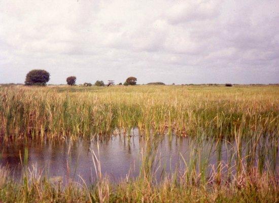 Arthur R. Marshall Loxahatchee National Wildlife Refuge: Marsh