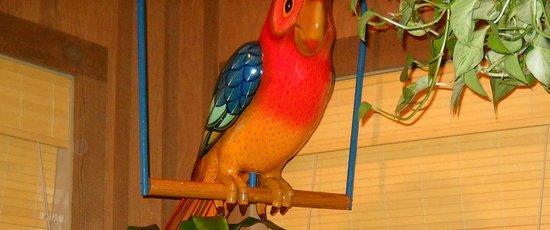 Islands: 南国の鳥オオム