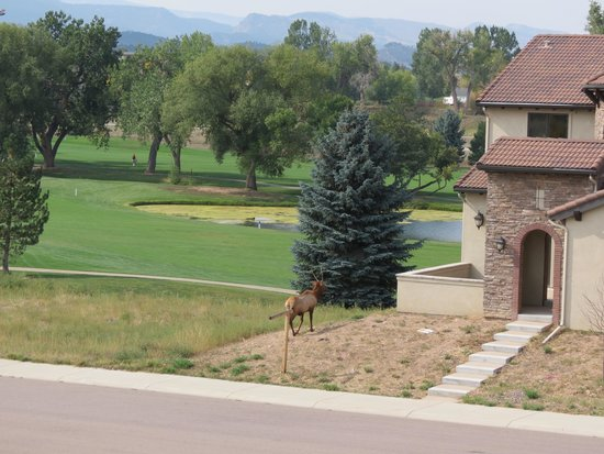 Mariana Butte Golf Course: Elk By Second Fairway