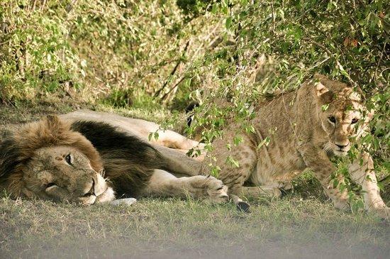 Cheetah Tented Camp: animales