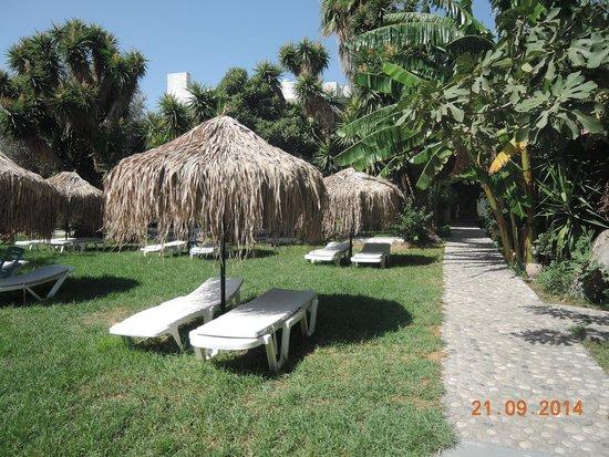 Oasis Hotel Bungalows Rhodes: у бассейна