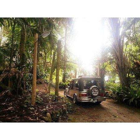 Casa Roca Inn: Jungle Parking!