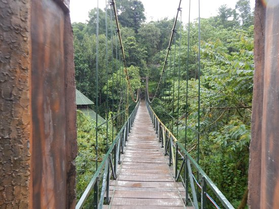 The hanging bridge at Vythiri Village
