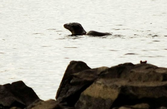 Galloway Activity Centre: Otter in the loch early morning