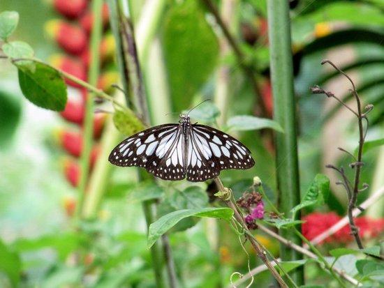 Siquijor Butterfly Sanctuary : enjoy!