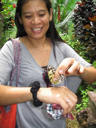 Siquijor Butterfly Sanctuary : my wife with one of the butterflies....