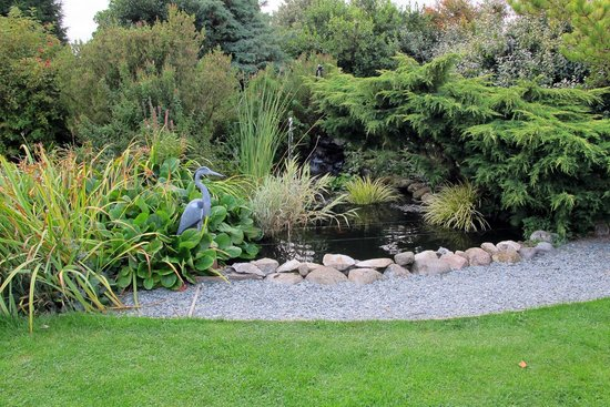 Tyn Rhos Country House: Fish Pool