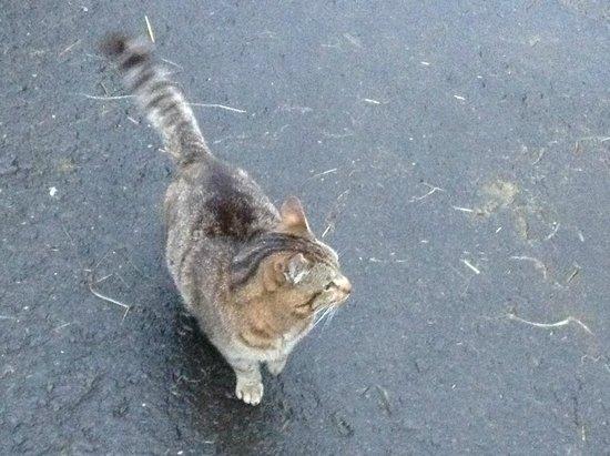Scottish Equestrian Hotel: Super friendly stable cat