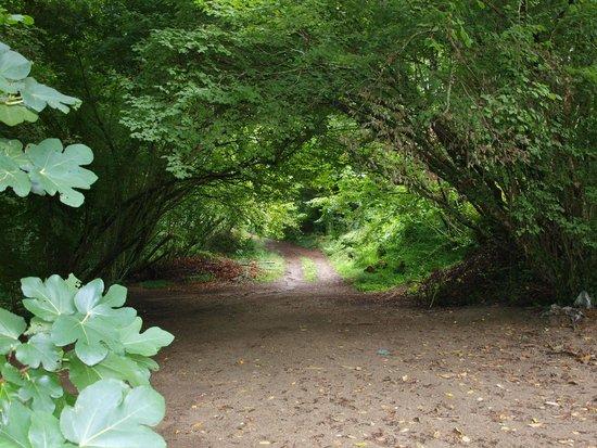 Pazo Larache : Camino de la esperanza