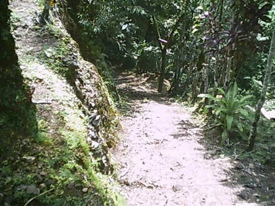 Pura Vida Gardens and Waterfalls : Trail leading to Vista Point
