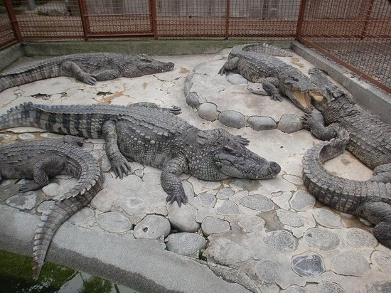 ‪Atagawa Tropical & Alligator Garden‬