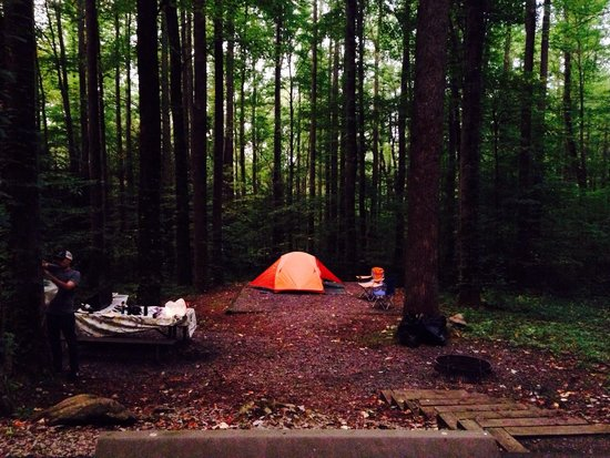 Cosby Campground: Campsite b42