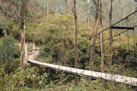 Peguche Waterfall : Swinging Bridge at the Peguche Falls
