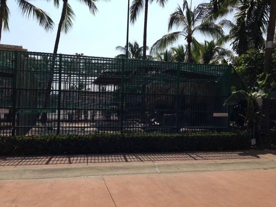 Paradise Village Beach Resort & Spa: Tiger Cage in middle of resort