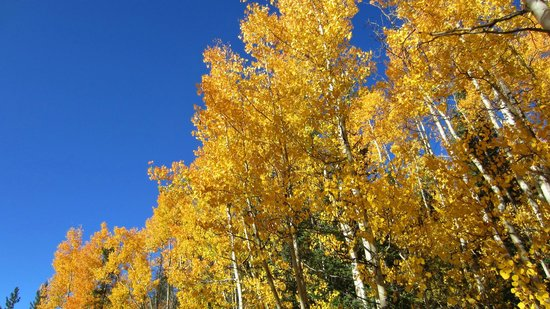 Winter Park Mountain Lodge: Great views of the Aspens
