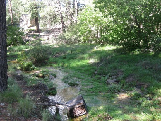 Mt. Lemmon Scenic Byway : stream next to camp at Mt Lemmon