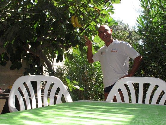 B&B Villa Gio: Fichi che fanno banane