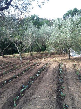 Da Fiorina: The garden