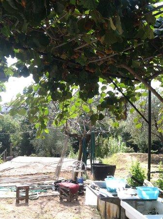 Da Fiorina: Sit outside under the kiwi vines