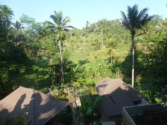 Pondok Sebatu Villa: Trop beau !!